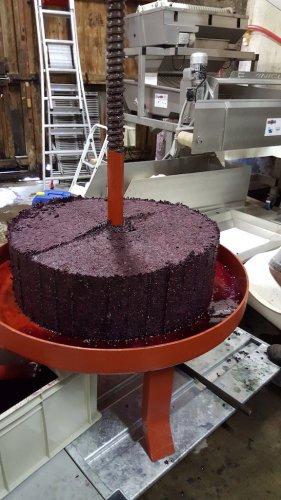 Intérieur du chai, gâteau issu de la presse du moût