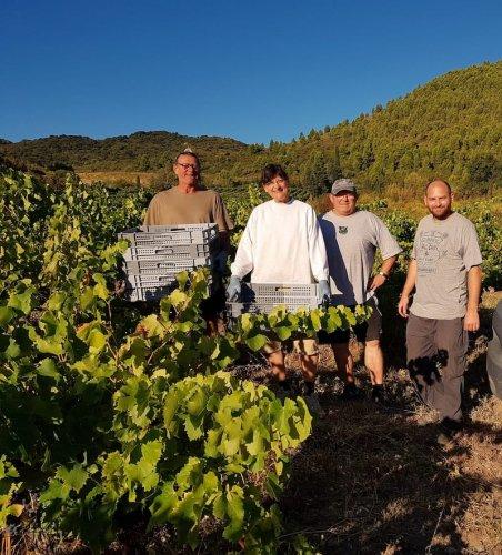Domaine Cirrus, septembre 2019 - première vendange de rosé
