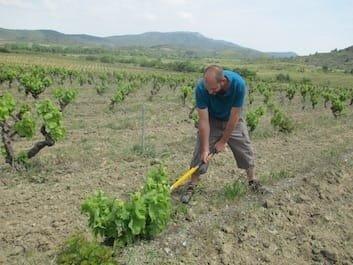 travail dans la vigne